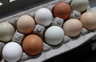 alergia a huevos
